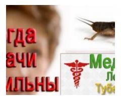 Медведки от туберкулеза!